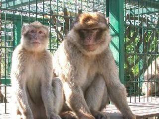 Tierpark Merzig © Tierpark Merzig