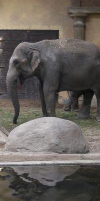 Elefantenhalle im Tierpark Hagenbeck © Olifant