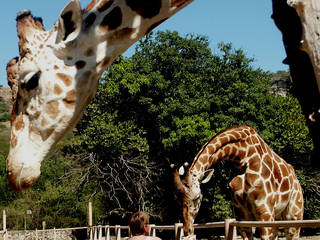 Zoofari © anetuka