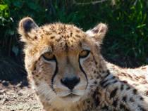 Exmoor Zoological Park © DartmoorGiant