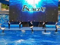 Believe - Shamu Show:
