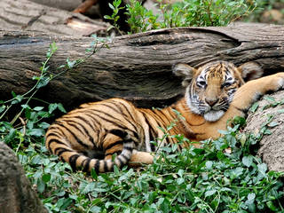 Der Cincinnati Zoo and Botanical Garden  in Ohio © MrGuilt