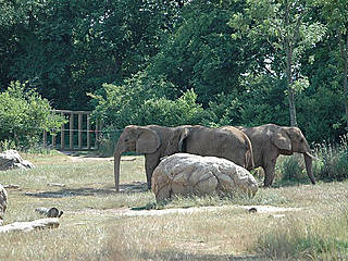 Elefanten im Nashville Zoo. © MrMedia