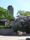 © Zoologischer Garten Halle - Zooturm und Zebraanlage